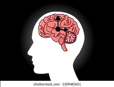 The circadian rhythms vector creative illustration. circadian clocks or biological clock these clocks control our brain when to sleep, tell our gut when to digest and.Brain vector.Brain clock