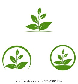 Circle eco logo, green leafs of plant, organic creative icon, Eco icon green leaf vector illustration