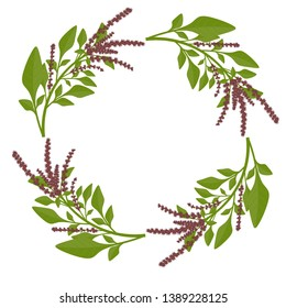 Circle of leaves and flowers of amaranth.  Amaranth wreath,  vector illustration.