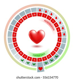 Circular flow chart with shiny red heart. Average number of days in menstrual cycle and periods of menstruation. Ovulation phase. Vector illustration.