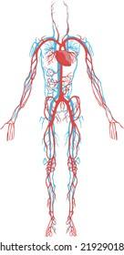 o que é sistema circulatório em hindi