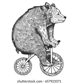 Circus bear on bicycle vector illustration. Scratch board style imitation. Hand drawn image.