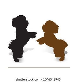 Circus dog. Two puppies poodle on two legs, silhouette on white background, vector