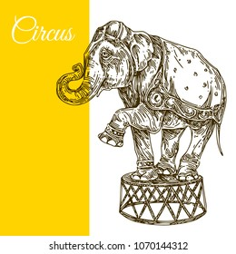 Circus elephant. Engraving style. Vector illustration.