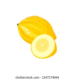 citron isolated on white background. Bright vector illustration of colorful half and whole of juicy citron. Fresh cartoon