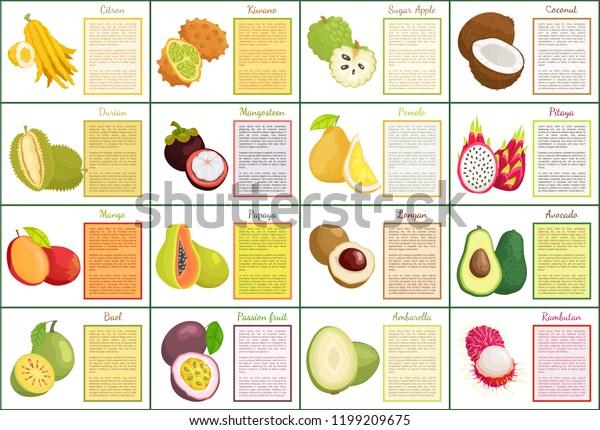 Citron Kiwano Coconut Sugar Apple Tropical Stock Vector