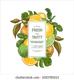 Citrus collection design template. Engraved style illustration. Bergamot, clementine, tangerine, lemon. Vector illustration