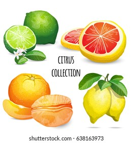 Citrus collection with grape, lemon, lime and lemon. High quality detailed vector illustrations