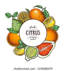 Citrus collection. Hand drawn vector illustration. Organic food label, citrus design template. Colored illustration. Vintage citrus set.