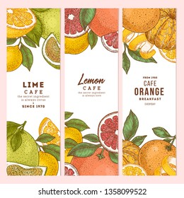 Citrus colored vertical design templates collection. Engraved  botanical style illustration. Vector illustration