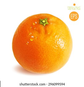 Citrus isolated on white background beautiful fresh fruit. Vector realistic art illustration for advertising packaging carton bottle banner wallpaper. Color yellow orange green. Colorful, bright