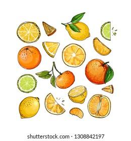 Citrus. Set of fruit. Fresh food. Lemons, oranges, mandarin, lime.  Vector colored food sketch.