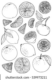 Citrus. Set of fruit. Fresh food. Lemons, oranges, mandarin.  Vector illustration. Coloring for adults
