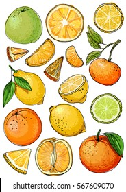 Citrus. Set of fruit. Fresh food. Lemons, oranges, mandarin, pomelo, lime.  Vector illustration.