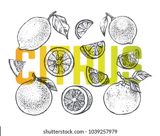 Citrus set - hand-drawn illustrations of lemon, lime and orange. Engraving Isolated vector vintage sketches of Citrus for the design of packs of juices & fruits