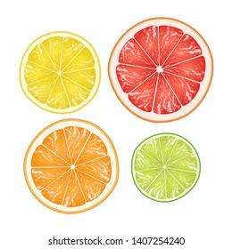 Citrus slices isolated on white background. Lime, lemon, orange and grapefruit in cross section. Vector illustration