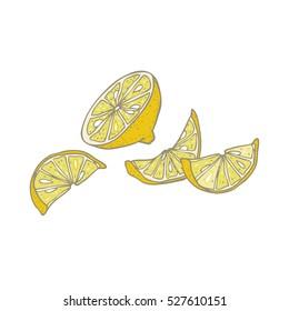 Citrus - vector illustration of a sliced lemon, isolated.