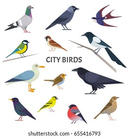 City birds. Vector collection of European birds, such as pigeon, crow, jackdaw, gull, sparrow, tit and others in trendy flat style. Isolated on white.
