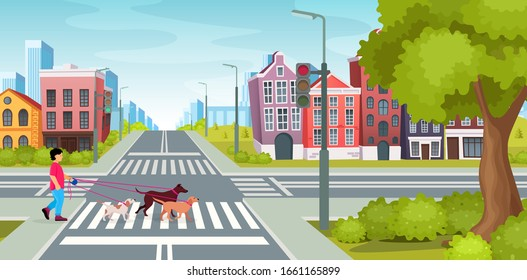 City road with crossroads traffic lights. Boy walking dogs across the road at crossroads. City road with crossroads on background vintage building, houses residential with crossing crosswalks vector