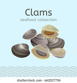 Clams on a light background. Seafood collection. Vector illustration.