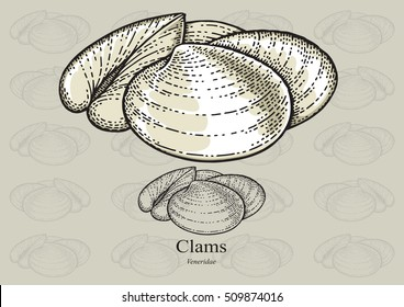 Clams. Vector illustration with refined details and optimized stroke that allows the image to be used in small sizes (in packaging design, decoration, educational graphics, etc.)