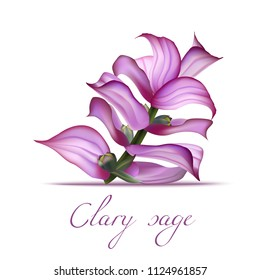 Clary Sage Flower. Realistic Elements for Labels of Cosmetic Skin Care Product Design. Vector Isolated Illustration