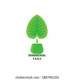 class logo design. green taro ornamental plant logo design