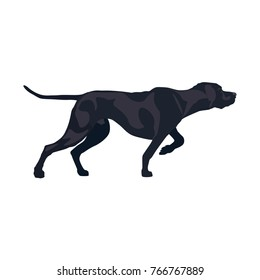 Classic pointer stance. Gun dog breed. Vector illustration isolated on the white background