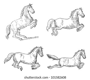 Classical Horse Dressage Movements, showing (1) Pesade, (2) Croupade, (3) Ballotade, and (4) Capriole, vintage engraved illustration. Dictionary of Words and Things - Larive and Fleury - 1895