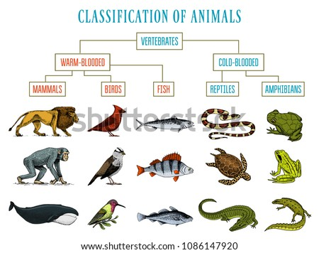 Classification Animals Reptiles Amphibians Mammals Birds Stock