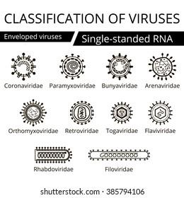 Classification of viruses. Enveloped viruses. Vector biology icons, medical virus icons.