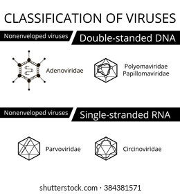 Polyomaviridae papillomaviridae - A férgek gyógyszereinek neve felnőttekben