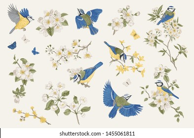 Classis vintage illustration. Set. Blossom garden with tits. Birds and flowers.