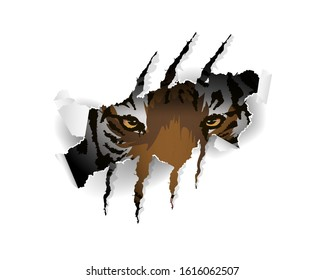 Claw scratches vector illustration, t-shirt design. wild hunt slogan with tiger and claw