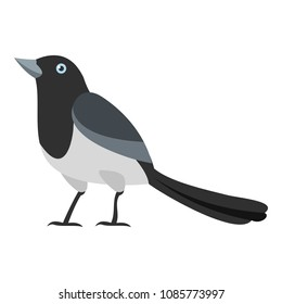 Clever magpie icon. Flat illustration of clever magpie vector icon for web