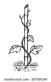climbing plant on bamboo / cartoon vector and illustration, black and white, hand drawn, sketch style, isolated on white background.