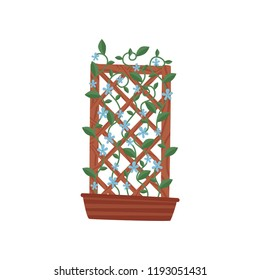 Climbing plant with small blue flowers in brown pot with wooden trellis. Gardening theme. Flat vector icon