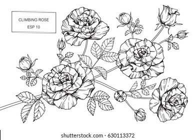 Rose line drawing images stock photos vectors shutterstock climbing rose flowers drawing and sketch with line art on white backgrounds mightylinksfo