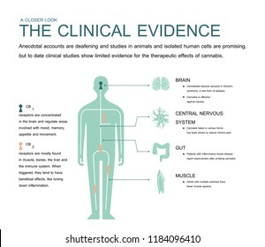 the clinical evidence cannabis and anecdotal accounts are deafening and isolated human cells are promising.but to date clinical studies show limited evidence for the therapeutic effects cannabis.
