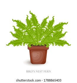 Clip art House plants in pots. Bird's Nest Fern vector illustration isolated on white background. Vector cute houseplant interior decor of home and office. Flat style vector illustration