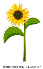 Clipart of a sunflower plant that bears one flower head with bright yellow ray coiled florets on a green-colored slender stalk that has two leaves, vector, color drawing or illustration.