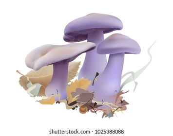 Clitocybe nuda or Lepista nuda, commonly known as the Wood blewit or Blue foot edible mushroom in natural environment.Realistic vector illustration on white background.