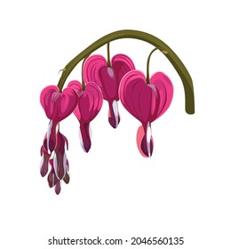 Close up of bleeding heart flower, also known as lyre flower. Flower are perfectly heart shaped. Hand drawn colorful illustration with blooming dicentra flower.