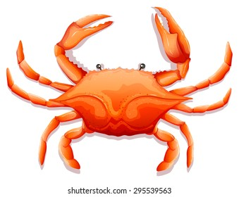 Crab Cartoon Or Crab Clipart Cartoon Isolated On White Background ...   280x339