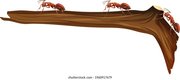 Close up of many red ants walking on a branch on white background illustration
