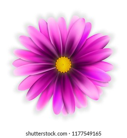 Purple Flower With Yellow Center Images Stock Photos Vectors