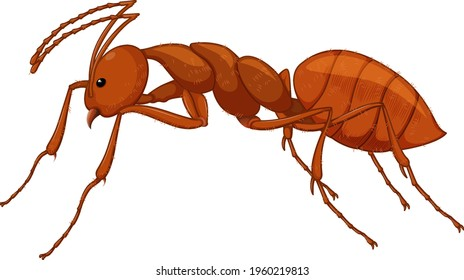 Close up of red ant in cartoon style on white background illustration
