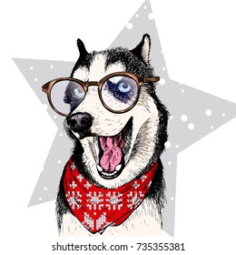 Close up vector portrait of Siberian husky dog wears winter bandana and glasses. Isolated on star. Skecthed color illustraion. Christmas, Xmas, New year. Party decoration, promotion, greeting card.