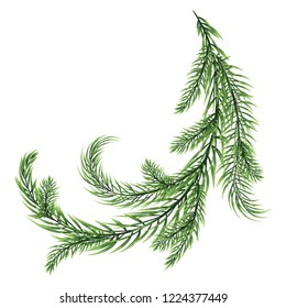 Close-up Fir branch of conifers are bent at the intersection of white background. vector illustration.