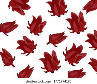 Closeup fresh Roselle flower ( Jamaica sorrel, Rozelle or hibiscus sabdariffa ) isolated on white background. Icon vector illustration.